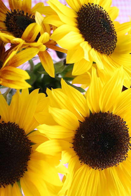 how to make your sunflowers last longer