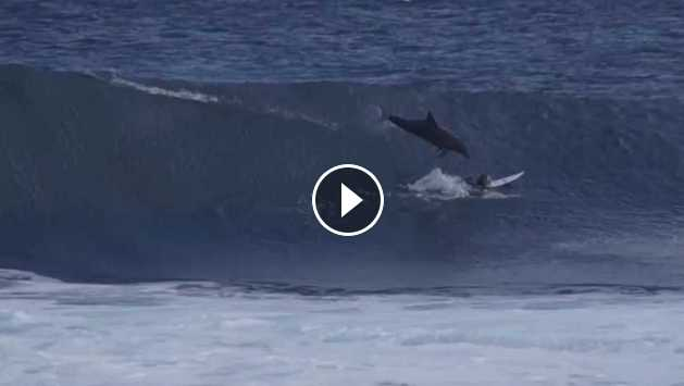 Dolphin Jumps On Grom