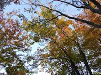 秋の市民の森(鏡伝池緑地) 紅葉