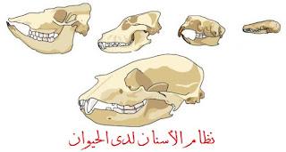 أسنان الحيوانات