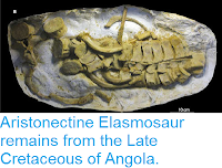http://sciencythoughts.blogspot.co.uk/2015/10/aristonectine-elasmosaur-remains-from.html