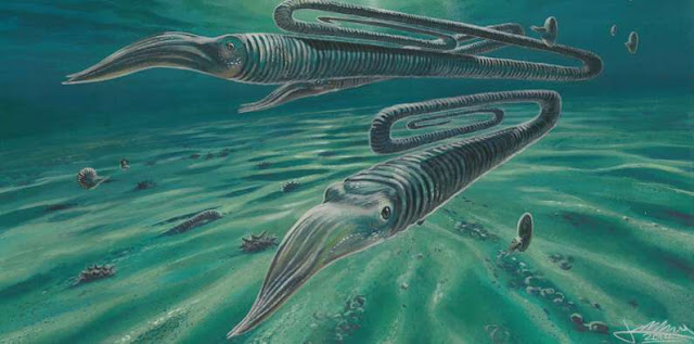 Antarctic fossils reveal creatures weren't safer in the south during the K/T extinction event