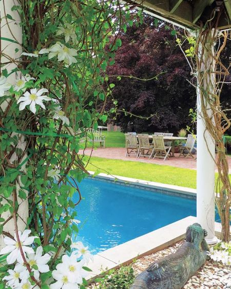 dream garden with swimming pool