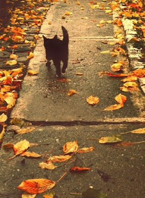 fall_inspiration_cat_street