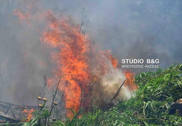 Άμεση επέμβαση της πυροσβεστικής σε φωτιά στα Γαλαναίικα Καρυάς στην Αργολίδα