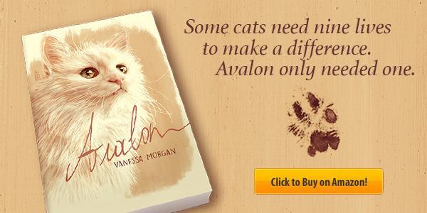 kedi cats istanbul