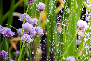 Zobacz jak podlewać rośliny doniczkowe latem