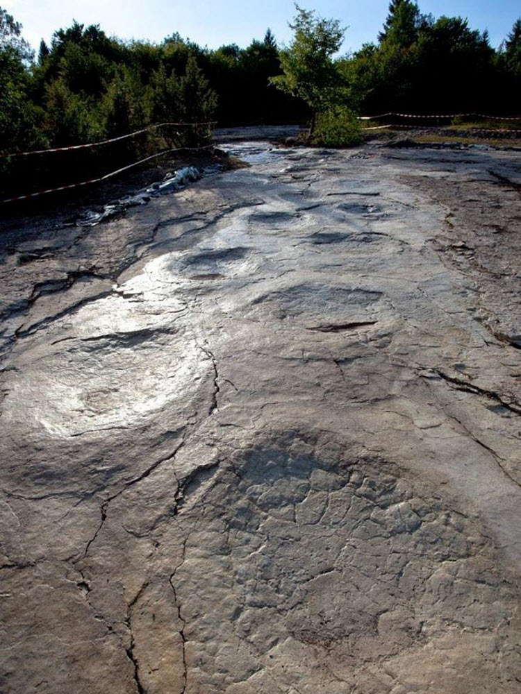 World's Longest Dinosaur Trackway