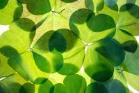 https://www.timeanddate.com/holidays/ireland/st-patrick-day