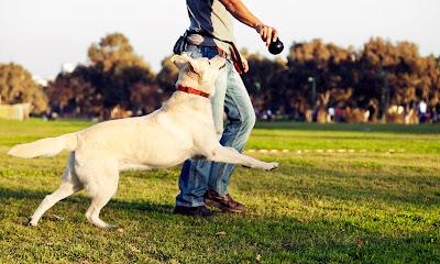 Tener un perro activo