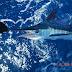 Reconocen Cap Cana como destino comprometido con la preservación de las especies marinas