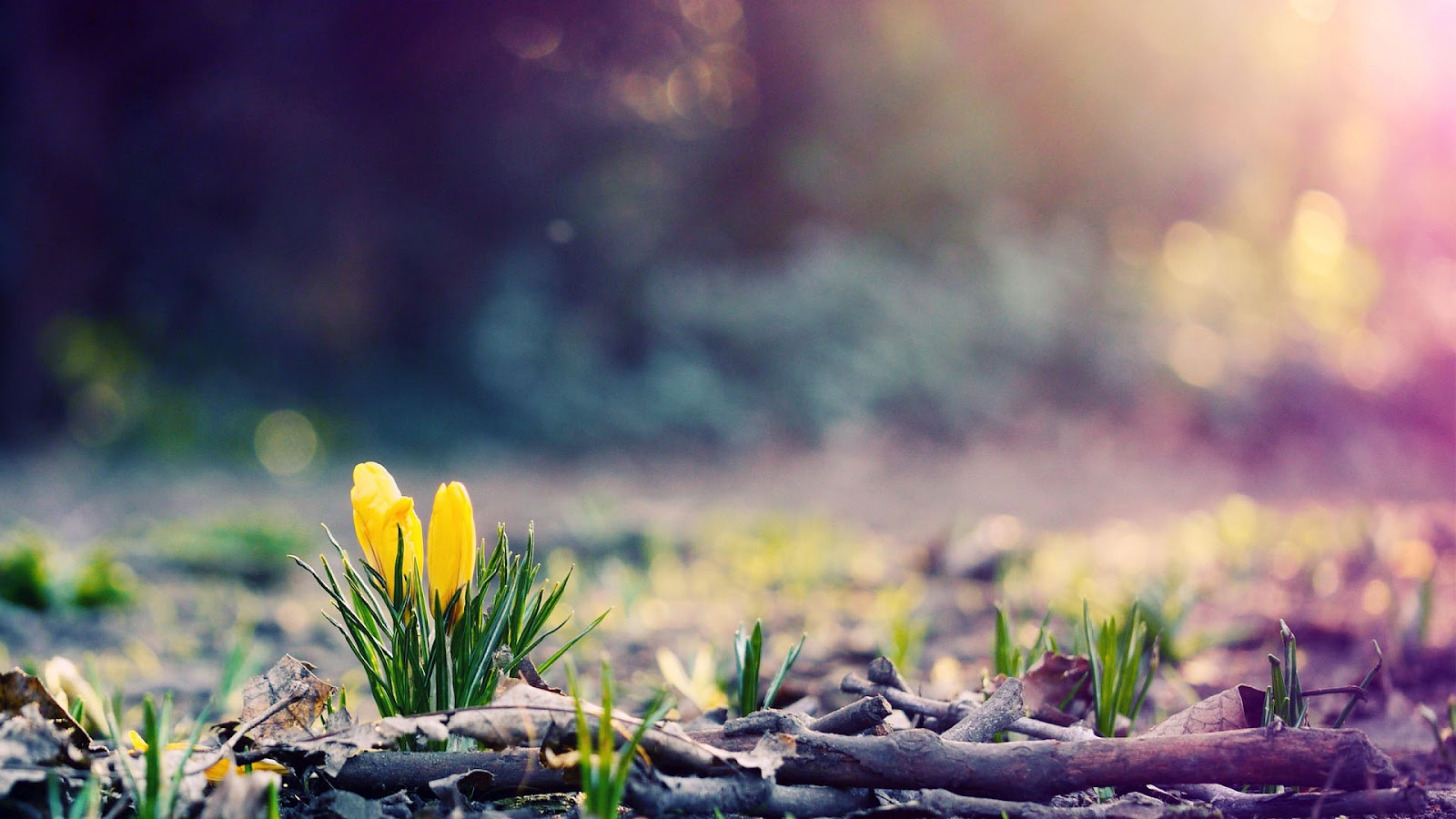 lente achtergronden hd - photo #3
