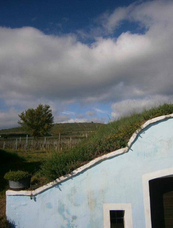 blauer Weinkeller - Weinberg - blauer Himmel