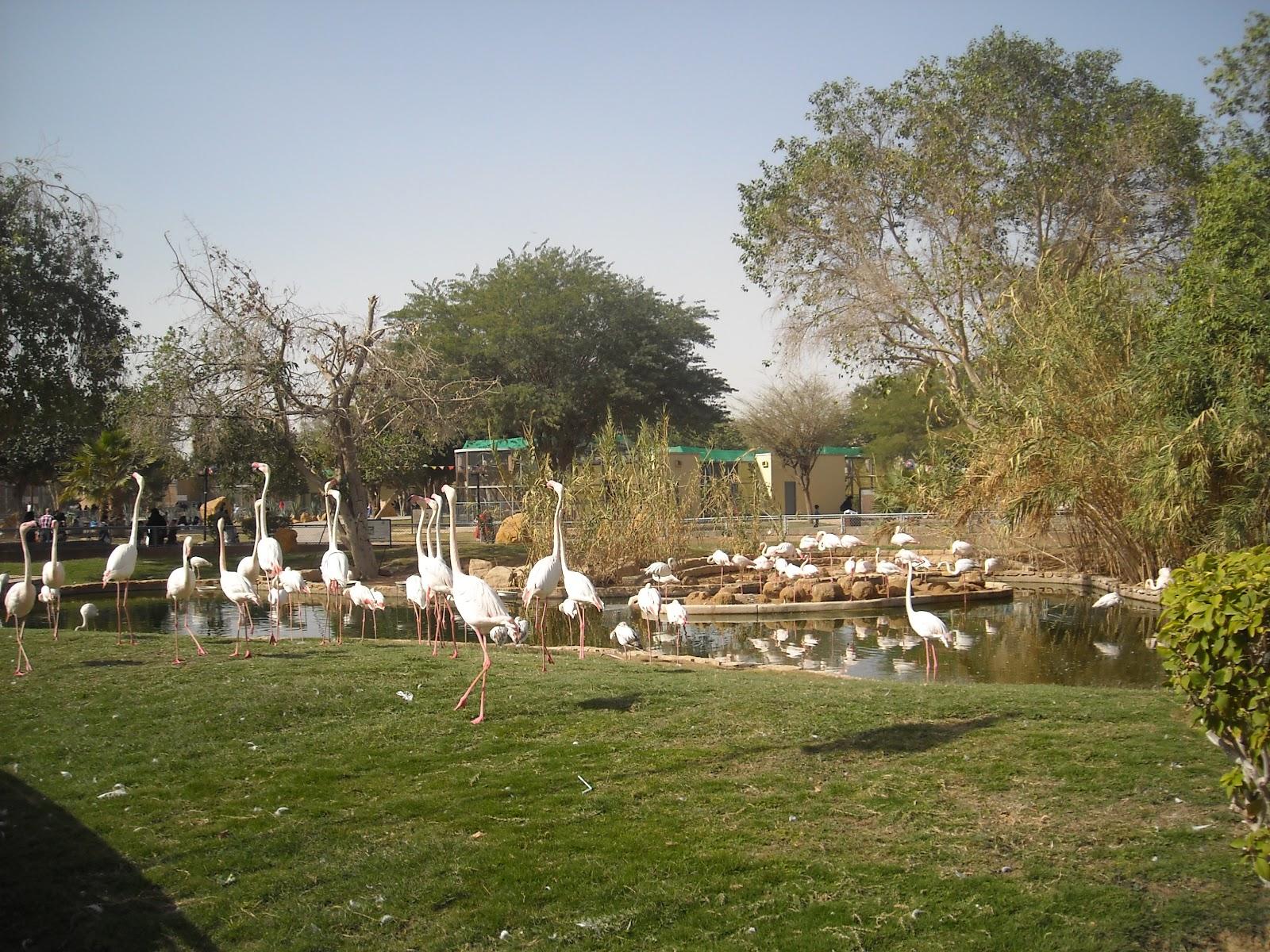 Riyadh Zoo