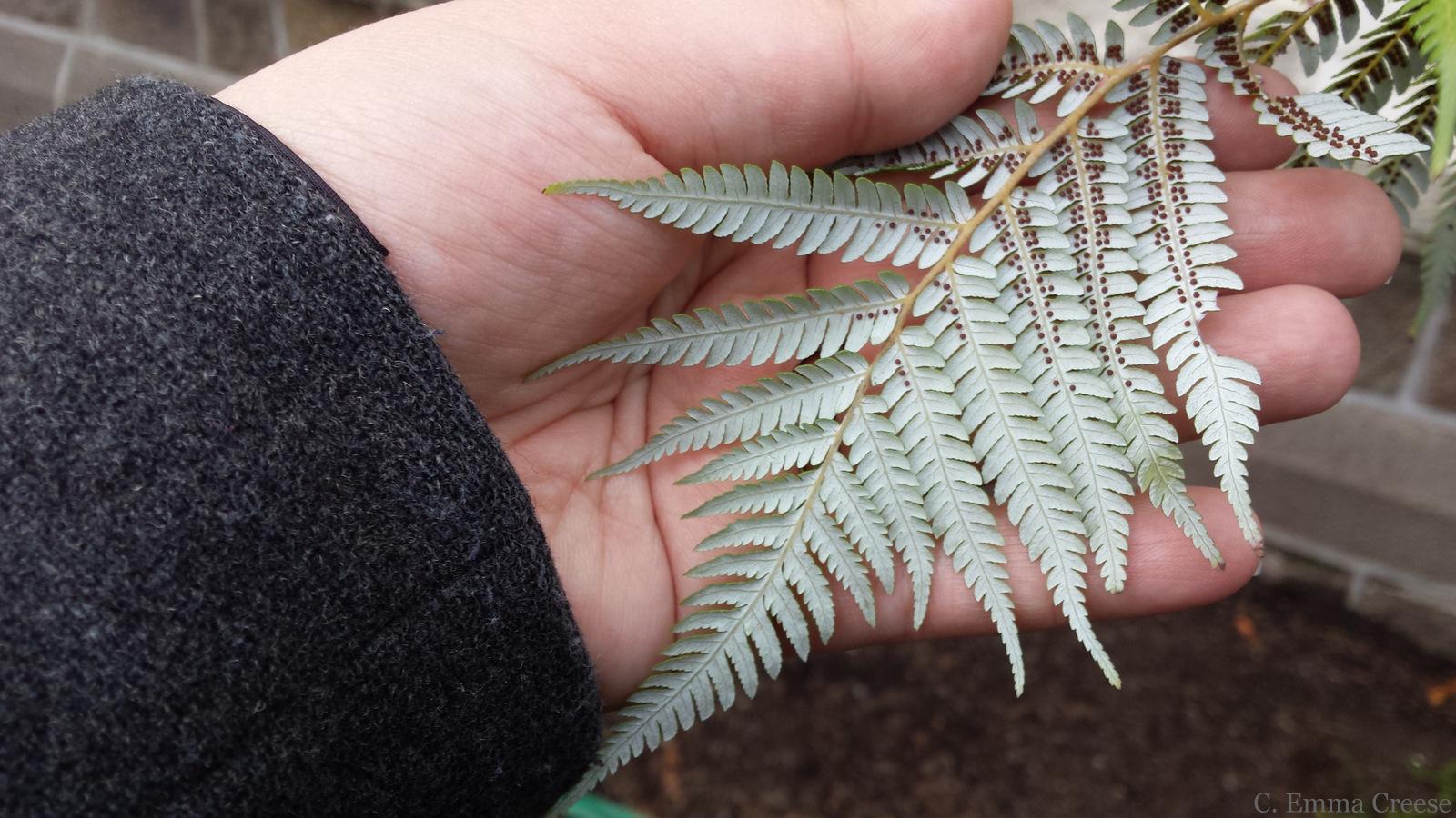Christchurch Botanic Gardens New Zealand