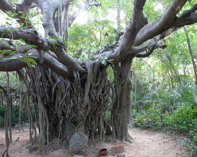 L 39 arbre souhaits conte indien l 39 art du bonheur - L arbre a souhait ...