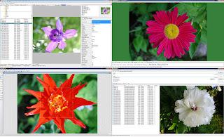 تنزيل برنامج تزيين الصور الشخصية مجانا WildBit Viewer