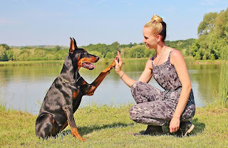 Doberman-pinscher-Dog-with-women