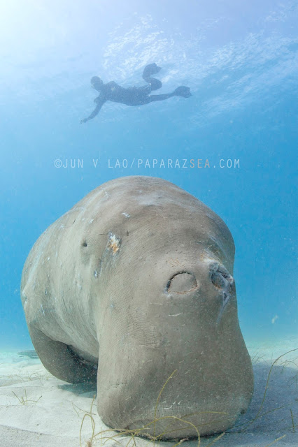 Scuba Diving, Underwater Photography, Dugong Dive, Palawan