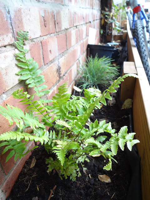 fern and grass in garden