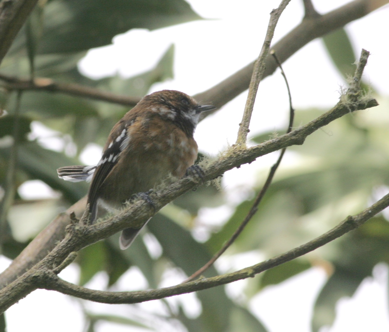 The Birdist: Hawaiian Birds and Wildlife Mega Photo Post
