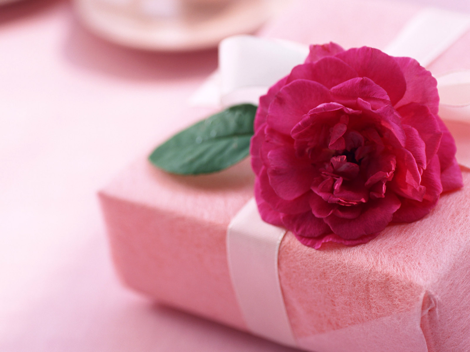 Beautiful Flower Wallpapers For You Gift And Love Flower