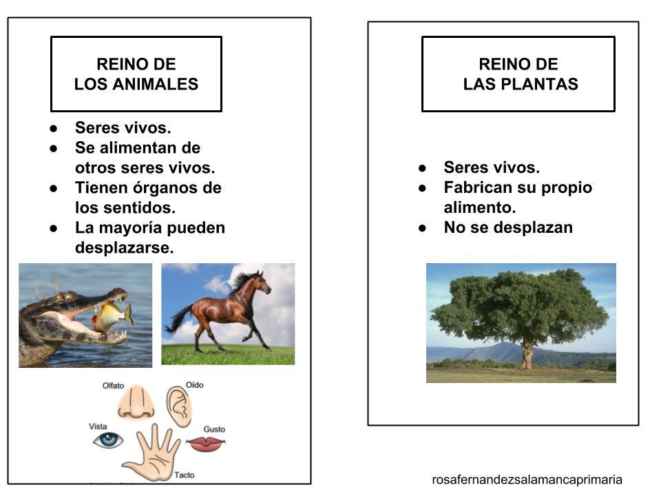 Maestra De Primaria El Reino Animal Y El Reino De Las Plantas Esquemas De Naturales Adaptados A Un Nivel De 3º Herramientas De Observación De Plantas Y Animales