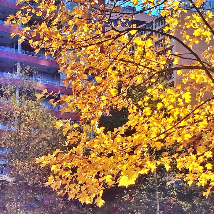 Vancouver Autumn