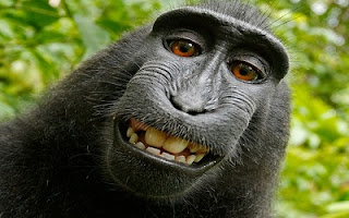 Selfie scimmia divertente