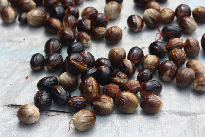 how long for nutmeg shells to dry before cracking them open to collect the seed