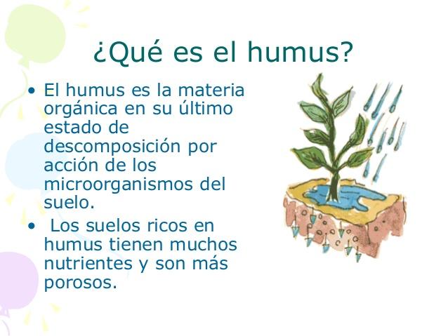 formación de humus