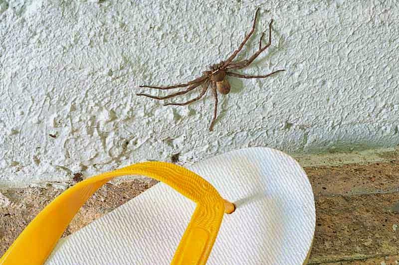 spider, flip-flop,scale