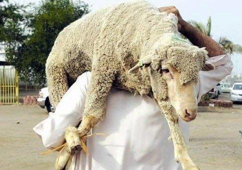 أحكام الأضحية و 18 عيبا يفسد اضحية العيد