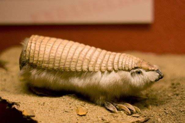 Pink Fairy Armadillo - 22 Bizzarre Animals You Probably Didn't Know Exist