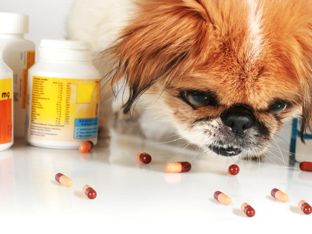 animal  Diarréia em Cães Causas e Tratamentos