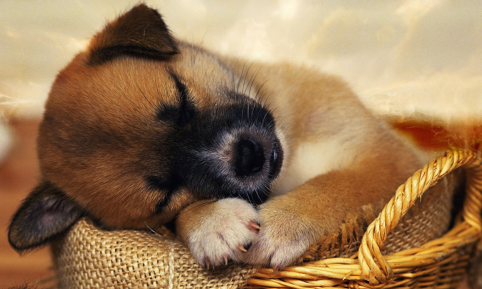 Cute Puppies Wallpaper 1080p Puppy Photography 1080p Wallpapers