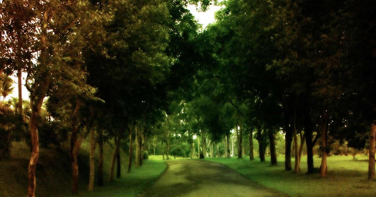 Mavis Fitzpatrick Tree Wallpaper Hd