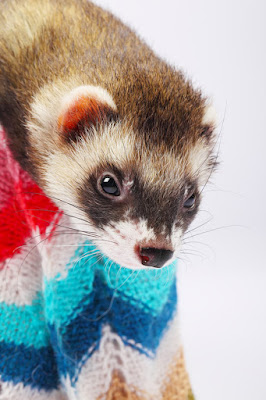 Sleeping, tunnels, food toys and water bowls for ferret enrichment