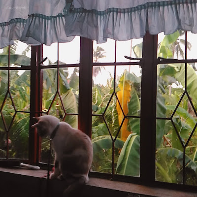 cat by the window - photos of the week may 2014 sexyfoosa blog -  for free use - please backlink us thanks