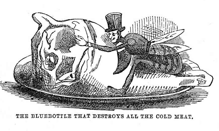 "an 1847 cartoon of a fly on cold meat, ""The bluebottle that destroys all the cold meat"""