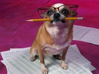 contabilista cão rir lol email divertido