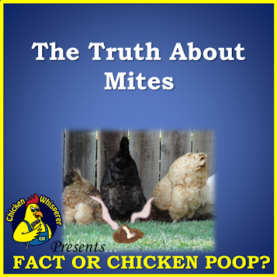 The Truth About Mites
