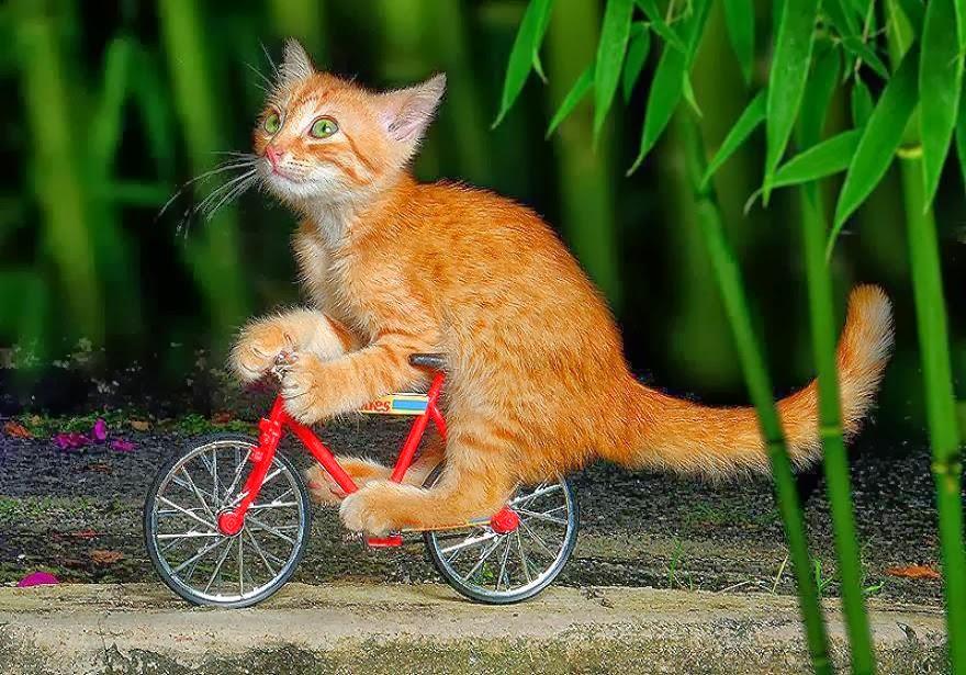 Днем, прикольные картинки вело