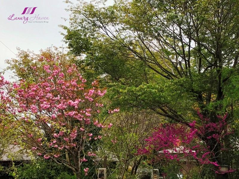 mount yoshino hitomesenbon sakura festival