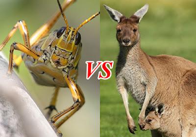 Grasshopper in Australia is equal to Kanguru in Texas