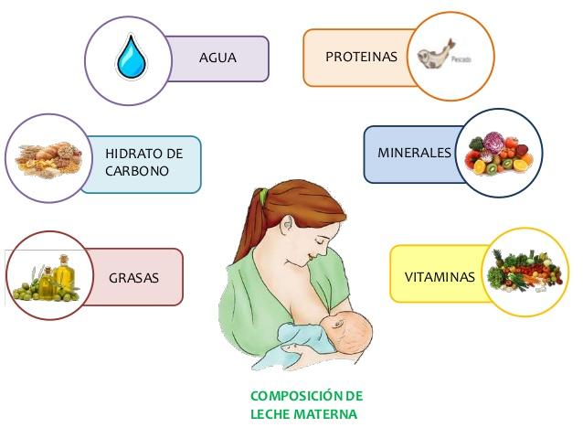 Lactancia materna leche materna