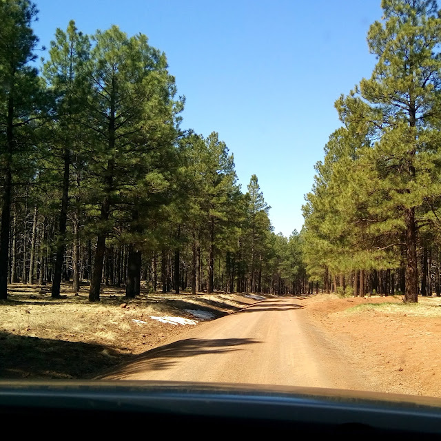 off-roading to lava river cave through the coconino national forest