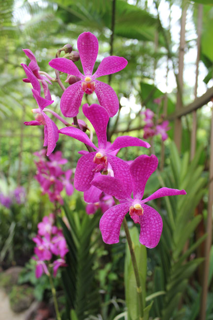 Belleza de orquidea