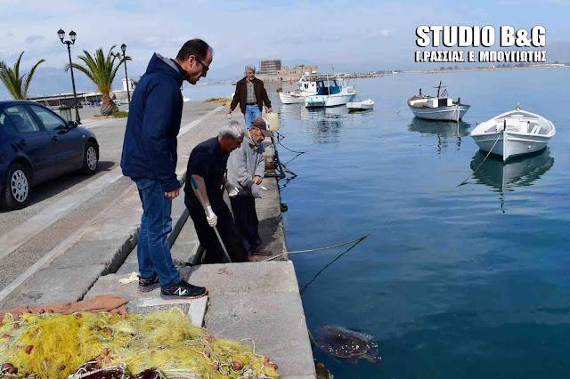 Νεκρή θαλάσσια χελώνα καρέτα καρέτα  μέσα στο λιμάνι του Ναυπλίου (βίντεο)