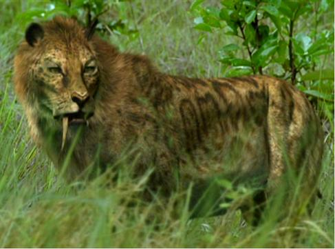 Image Gallery Smilodon Hunting